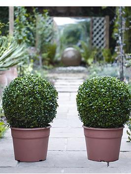 thompson-morgan-buxus-ball-diameter-35cm-2-x-30cm-pots