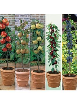 thompson-morgan-fruit-collection-5-plants