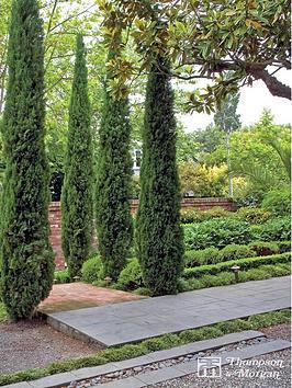 thompson-morgan-cupressus-sempervirens-italian-cypress-stricta-14-cm-pot-x-6