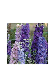 thompson-morgan-delphinium-039new-millennium-dwarf-mixed039-10-postiplugs