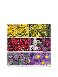 thompson-morgan-colour-perennials-collection-12-x-50mm-plugs