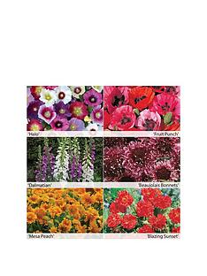 thompson-morgan-first-year-flowering-perennials-collection-12-x-50mm-plugs