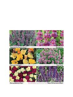 thompson-morgan-fragrant-perennials-collection-12-x-50mm-plugs