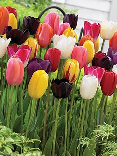 thompson-morgan-tulip-039everlasting039-mix-64-bulbs-size-1112-free-gift-with-purchase