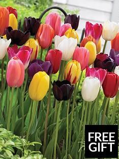 thompson-morgan-tulip-039everlasting039-mix-64-bulbs-size-1112