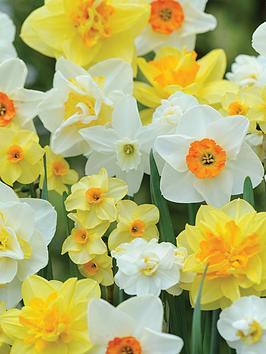 thompson-morgan-best-daffodil-mix-80-bulbs