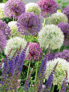 thompson-morgan-allium-collection-200-bulbs