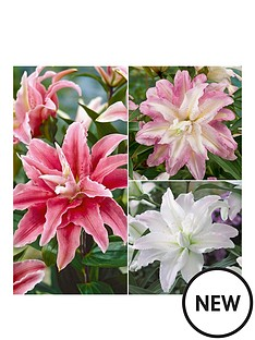 thompson-morgan-tree-lily-039crystal039-collection-9-bulbs-size-1820