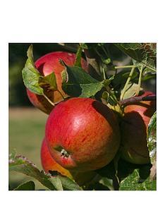 thompson-morgan-apple-braeburn-1-x-tree