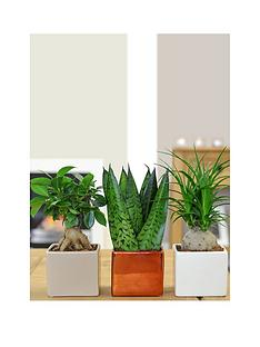 thompson-morgan-cube-pot-set-with-easy-care-plants