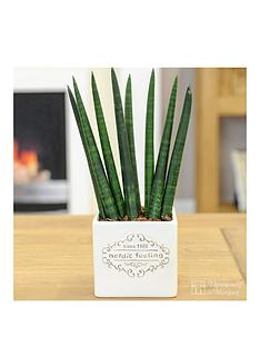 thompson-morgan-vintage-039nordic-feeling039-pot-with-easy-care-plant-cream