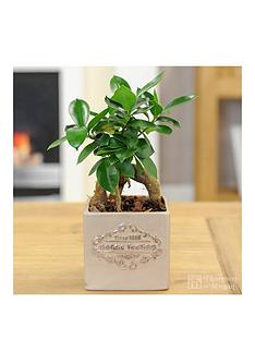 thompson-morgan-vintage-039nordic-feeling039-pot-with-easy-care-plant-sand