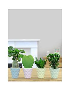 thompson-morgan-diamond-pots-with-easy-care-plants-pastel-colour-collection-set-of-4