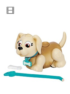 pet-parade-single-puppy-pack-labrador