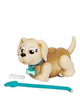 pet-parade-single-puppy-pack-labrador