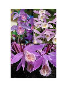 thompson-morgan-pleione-orchid-collectionnbsp-01-01cm-bulb-x-3