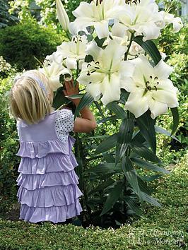 thompson-morgan-tree-lily-pretty-woman-10-bulbs-size-1416