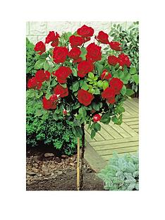 thompson-morgan-rose-standard-red-1-bare-root