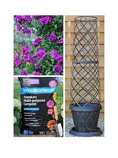 thompson-morgan-petunia-purple-rocket-collection-3nbsppostiplugs