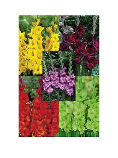 thompson-morgan-gladioli-collection-15-corms-size-1214