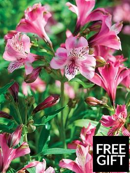 thompson-morgan-alstroemeria-butterfly-hybrids-6-postiplugs