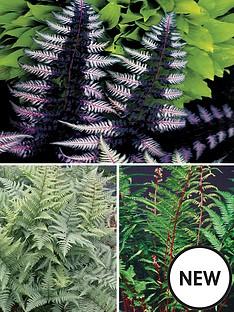 thompson-morgan-fern-athyrium-collection-30mm-plug-x-3-exotic-ferns