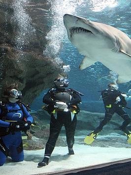 virgin-experience-days-shark-divingnbspat-the-blue-planet-aquarium-cheshire