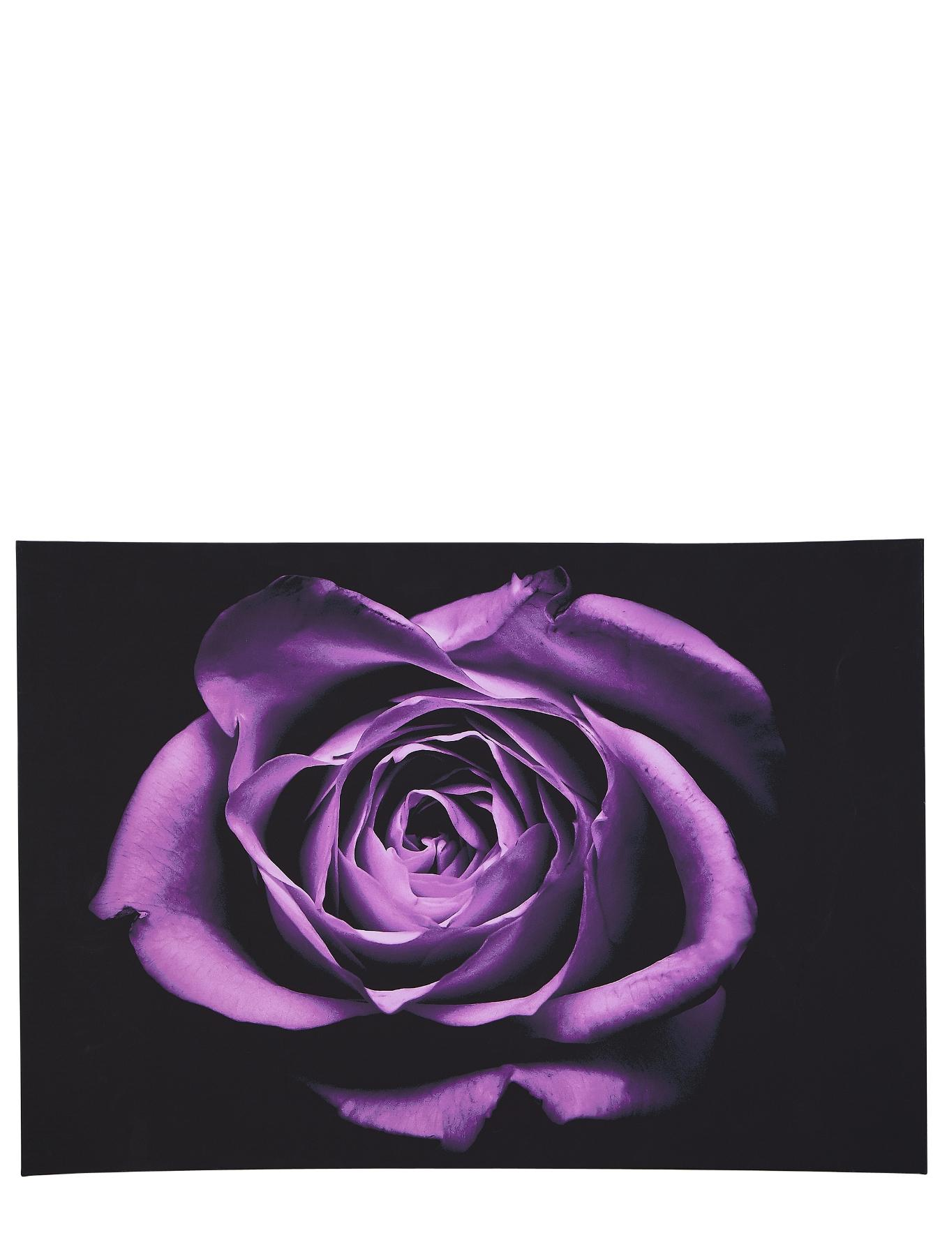 Drama Rose Canvas