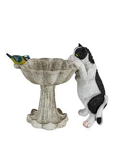 bird-bath-with-cat