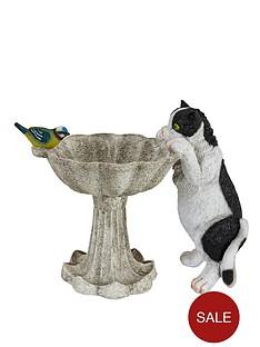 bird-bath-with-cat