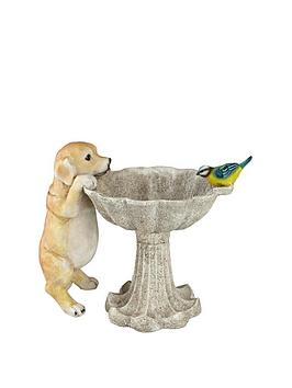 bird-bath-with-dog