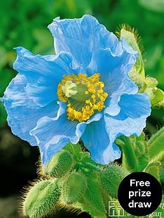 thompson-morgan-meconopsis-blue-poppy-4-jumbo-plugs