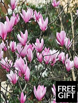 thompson-morgan-magnolia-heaven-scent-1-x-35-litre-pot