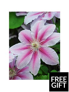 thompson-morgan-clematis-nelly-moser-3-litre-pot