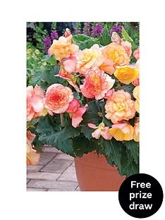 thompson-morgan-begonia-apricot-shades-33cm-pre-planted-pot