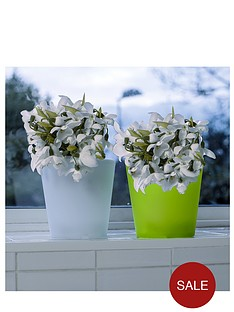 plastic-twin-pack-light-up-flower-pot-small