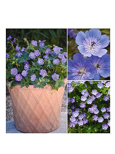 thompson-morgan-geranium-hardy-rozanne-3