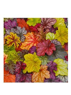 thompson-morgan-heuchera-tapestry-mix-46