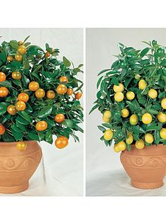 thompson-morgan-citrus-fruit-collection-2-x-9cm-pots