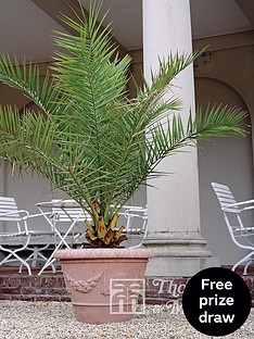 thompson-morgan-phoenix-palm-3-litre-pot-x-2