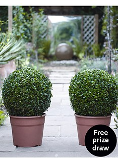 thompson-morgan-buxus-ball-diameter-35-cm-30-cm-pot-x-2