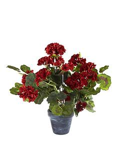 red-geranium-trailing-plant