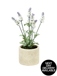 white-lavender-in-stone-effect-pot