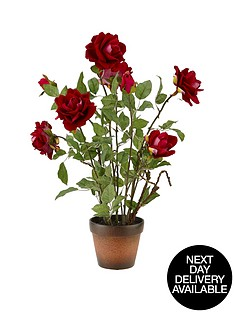 red-roses-in-terracotta-pot