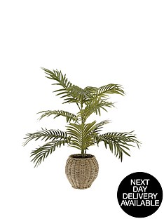 areca-palm-in-basket