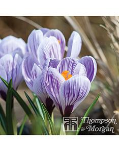 thompson-morgan-crocus-bicolour-collection-80-bulbs--free-gift-with-purchase