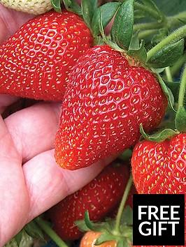 thompson-morgan-strawberry-sweetheart-12-runners