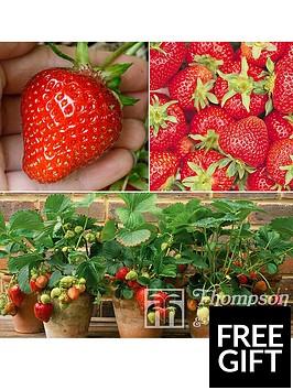 thompson-morgan-fruit-strawberry-collection-full-season-12-x-strawberry-runners