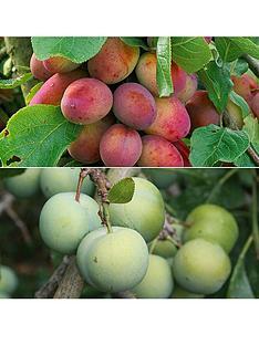 thompson-morgan-full-season-plum-collection-1-x-plum-opal-1-x-victoria-1-x-seneca