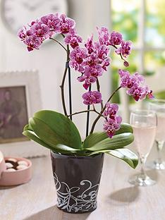 thompson-morgan-orchid-mini-moth-house-plant-in-black-ceramic-pot--free-gift-with-purchase
